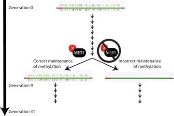 Research epigenetic